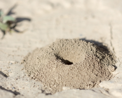 Our Understanding of the Universe is like an ant's understanding of its anthill.