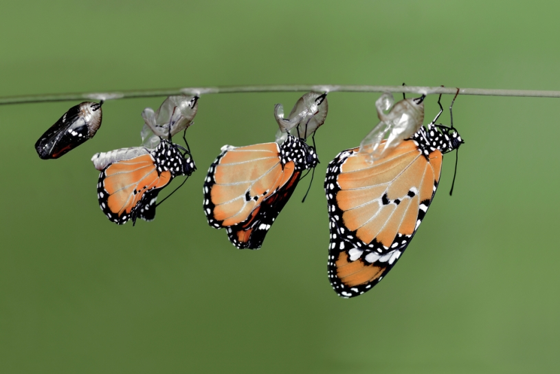 Transfigurations of Butterfly
